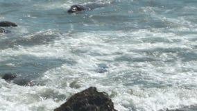 游泳在浅波浪的封印 股票视频