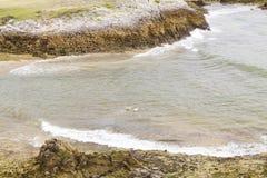 游泳在海岸的狗 库存照片