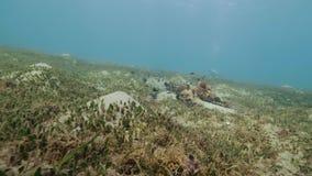游泳在海底水下的视图的鱼 漂浮的轻潜水员在水面下 影视素材