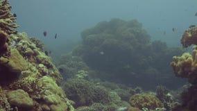 游泳在海水中视图的珊瑚礁中的鱼 gili印度尼西亚海岛在海龟水下的世界附近的lombok meno 股票录像
