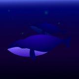 游泳在海洋的两条鲸鱼 库存图片