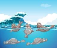 游泳在海洋的封印 向量例证