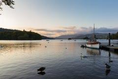 游泳在湖温德米尔的疣鼻天鹅和鸭子平静的黄昏场面  库存图片
