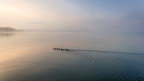 游泳在湖的鸭子在日落时间 免版税库存图片