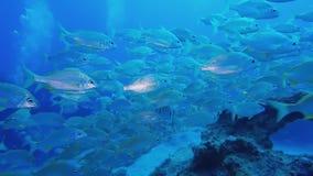 游泳在热带海洋的小组鱼 皇族释放例证