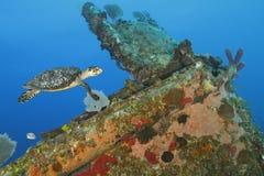 游泳在珊瑚的玳瑁复了海难 图库摄影