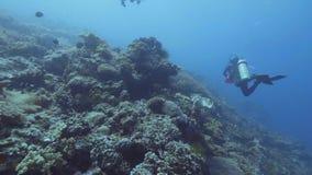 游泳在珊瑚礁和鱼中的轻潜水员水下的蓝色海 海潜水 影视素材