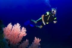 游泳在礁石的高级轻潜水员 免版税库存图片