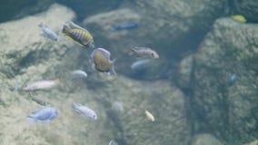 游泳在oceanarium的装饰海里的世界的鱼 在水族馆的野生鱼 股票录像