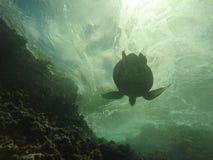 游泳夏威夷的海龟在水面下 库存照片