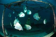 游泳棒的鱼在水面下 库存图片