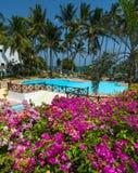 游泳池、棕榈树、桃红色花和蓝色 免版税库存图片
