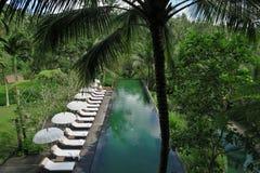 游泳池在密林 免版税库存图片