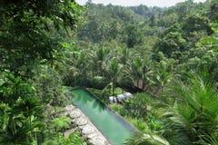 游泳池在密林 库存照片
