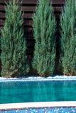 游泳池设计与户外针叶树的 免版税库存图片