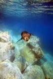 游泳海狮的公牛在水面下 免版税库存照片
