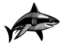 游泳鲨鱼,墨水图画 库存照片