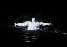 游泳鹈鹕 免版税库存图片