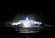 游泳鹈鹕 免版税库存照片