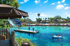 游泳Weeki Wachee的天然泉,佛罗里达 库存图片