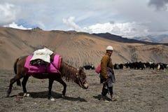 游牧人藏语 库存照片