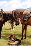 游牧组的马 免版税库存图片