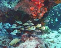 游行礁石 免版税图库摄影