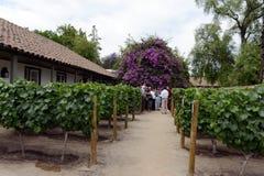 游览在酿酒厂圣丽塔的葡萄园里 免版税库存图片