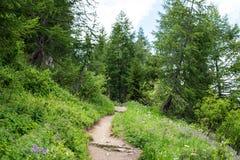 游览du勃朗峰足迹的一串迁徙的足迹 库存照片