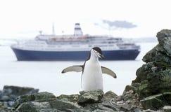 游轮马可・波罗和Chinstrap企鹅(Pygoscelis南极洲)在半月岛,布兰斯菲尔德海峡,南极洲 图库摄影
