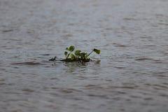 湄公河 免版税图库摄影