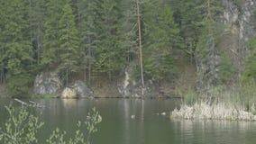 湖、杉木和峭壁视图 影视素材