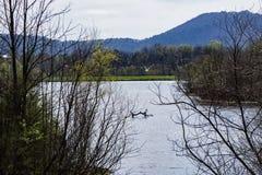 湖、鸟和山 库存图片