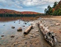 湖与严重的秋天结构树的岸日志 免版税库存照片