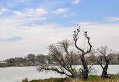 湖与澳大利亚朱鹭的Coogee风景 免版税库存照片