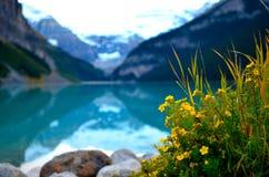 湖与花加拿大的虱子风景 免版税库存照片