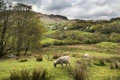 湖与风雨如磐的天空的区风景在乡下anf fie 免版税图库摄影