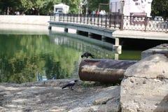 以湖为背景的下水道 库存照片