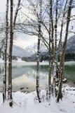 湖低谷树 库存图片