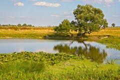 湖偏僻的岸结构树 免版税库存图片