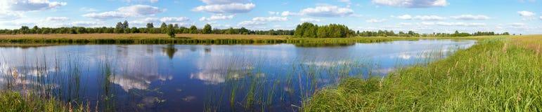 湖全景充满灯心草的夏天 免版税库存图片