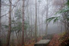 湖北八洞妇女森林早晨雾浩大的森林 图库摄影