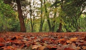 湖区国家公园秋天森林 图库摄影
