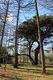 湖区国家公园秋天森林 免版税库存照片