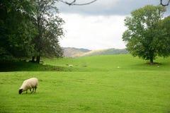 湖区在英国 免版税库存图片