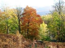 湖区秋天树的美丽的景色, Cumbria,英国 库存图片