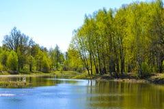 湖及早在春天 树,晴天,蓝天 免版税库存照片