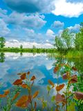 湖反射在春天 免版税库存图片