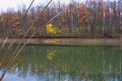 湖反射在秋天 库存图片