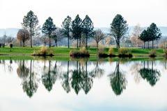 湖反射的结构树 图库摄影